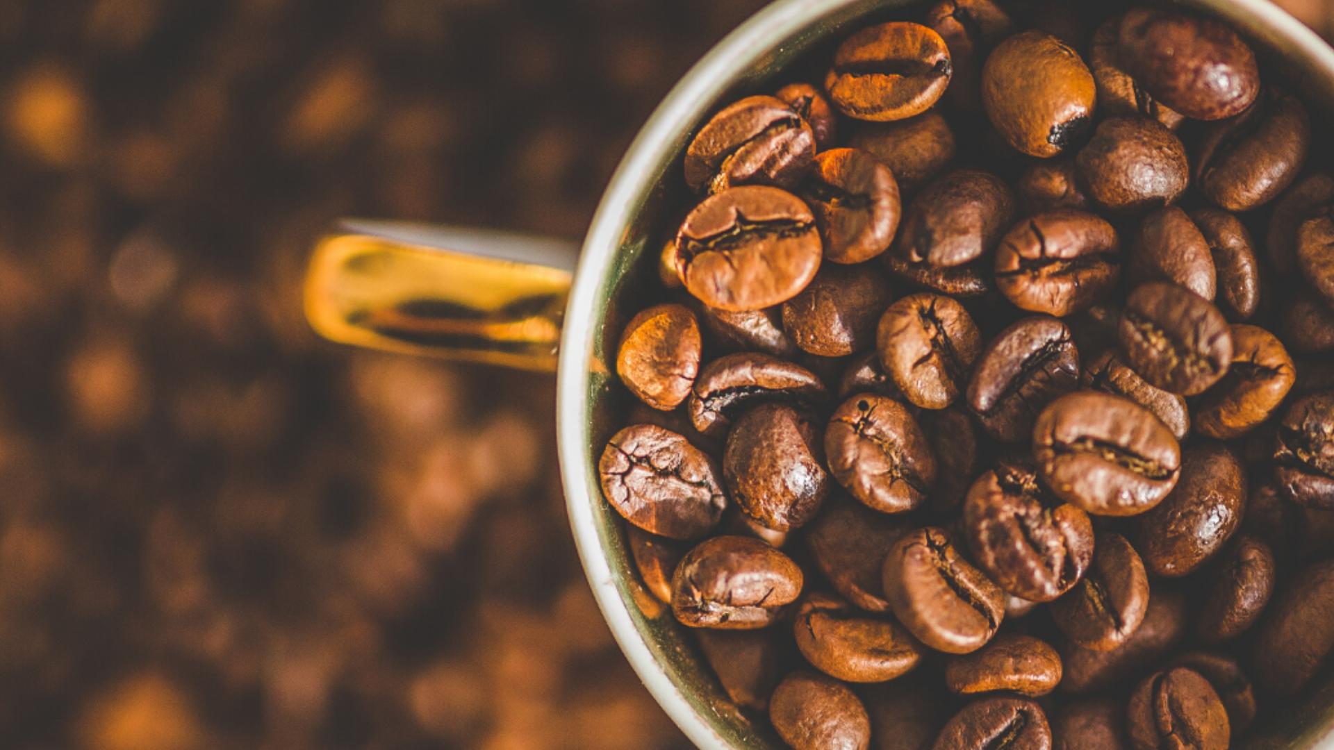 Os principais grãos para um bom café